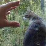 Kasi und die unglaubliche Hand des Grauens