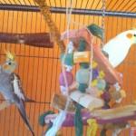 Vögel-Content