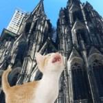 Cat App!