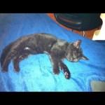 Awwww: zugelaufenes Katzenbaby
