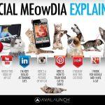 Social Me*ow*dia Explained