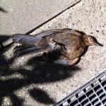 """""""Der schläft nur"""" #suicidebird"""