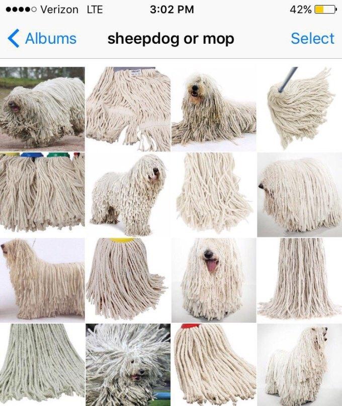 sheepdog-or-mop-by-karen-zack