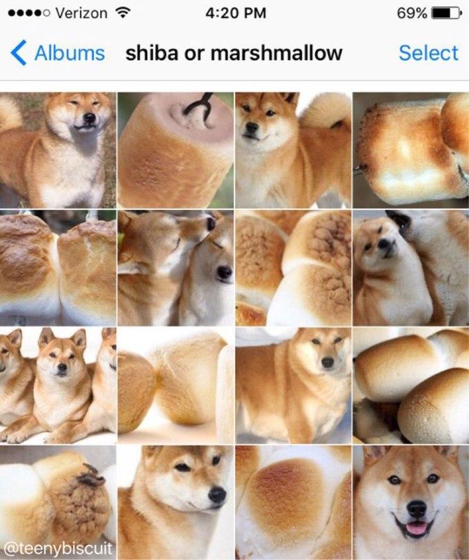 shiba-or-marshmallow-by-karen-zack
