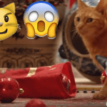 The struggle is real: Katzen vs. Weihnachten