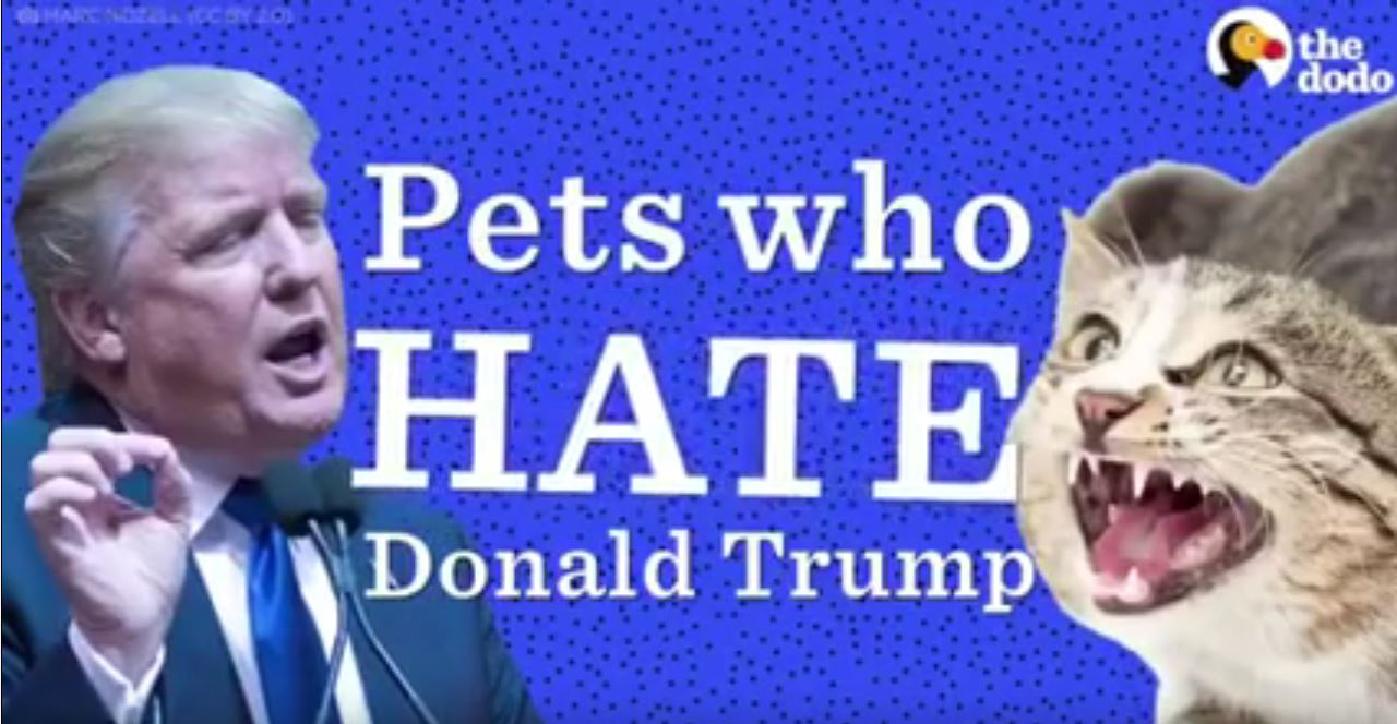 Pets who hate Donald Trump