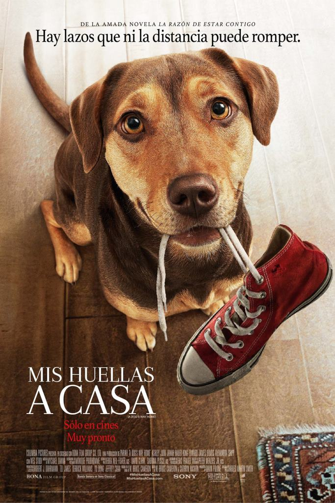 Mis huellas a casa (2019) HD 1080p Latino