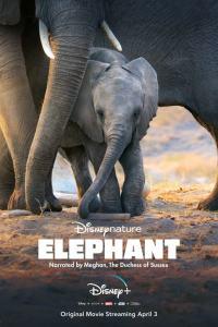 Los elefantes (2020) HD 1080p Latino