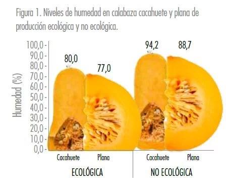 Calabaza ecológica - Estudios - Veritas