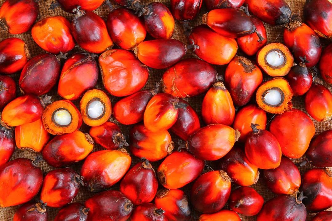 Palm Oil Fruits Close Up