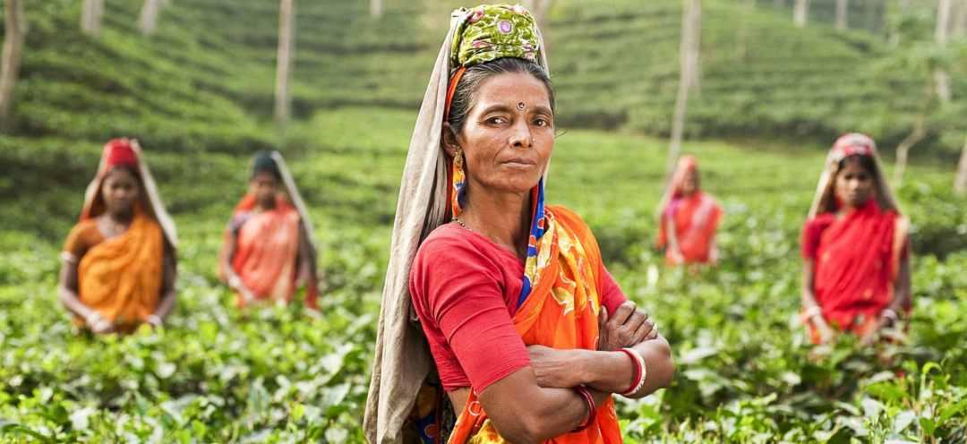 Women wearing saris stand in a tea field