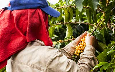 Combating Forced and Child Labor of Refugees in Global Supply Chains: The Role of Responsible Sourcing