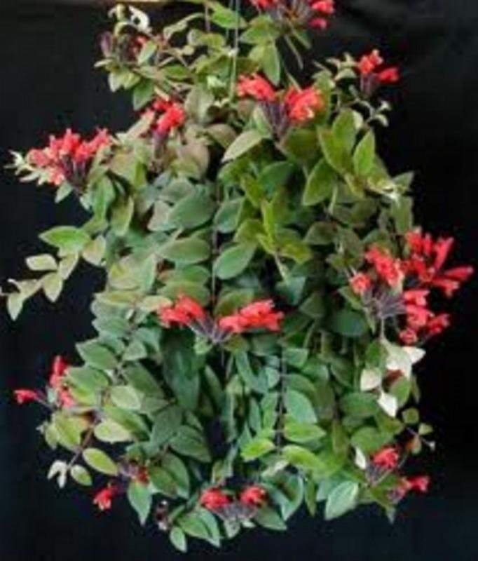 Indoor Plants Hanging Baskets