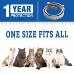 COTENI Collier antipuces pour Chats Une (1) année de prévention Contre Les puces et Les tiques pour Les Chats – Collier pour Chats Facilement réglable, sûr et étanche