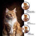 ONMOG Collier antipuces pour Chats Une (1) année de prévention Contre Les puces et Les tiques pour Les Chats – Collier pour Chats Facilement réglable, sûr et étanche