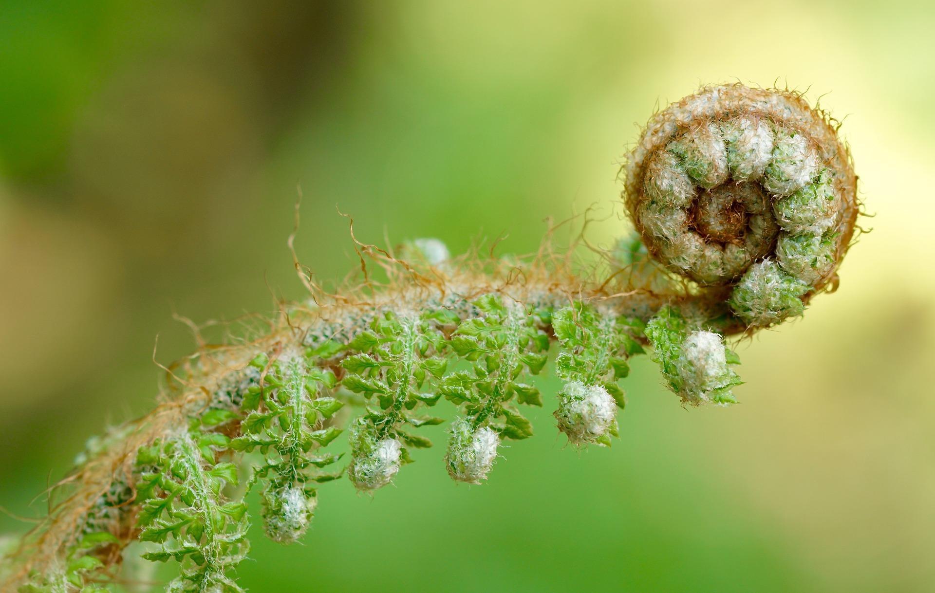croissance-developpement-environnement-verneco-vannes-bretagne