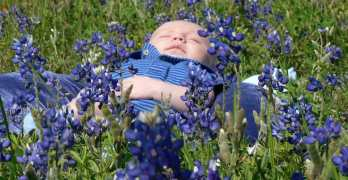 61 fleurige bloemennamen voor de lente