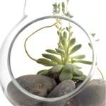 Bonsai Terrariums by Vernon Caldera