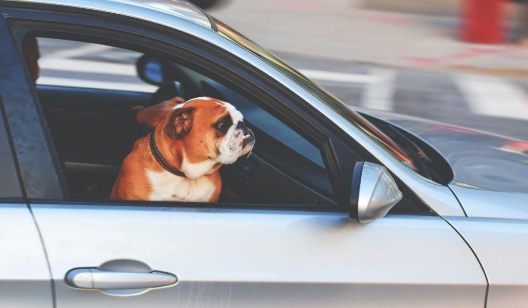 veronadogs adozione cane strutture vicine - il viaggio in auto