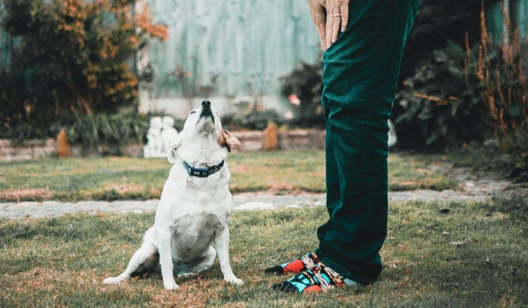 veronadogs - momento di condivisione con il cane