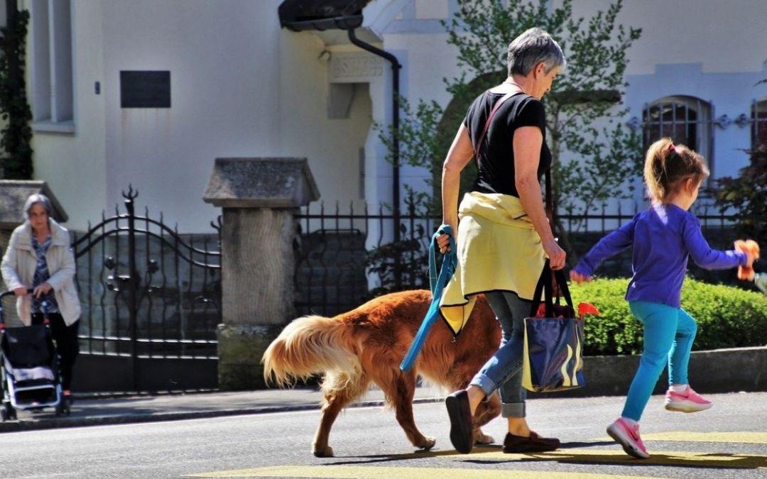 Consigli per far sentire il cane parte di un gruppo