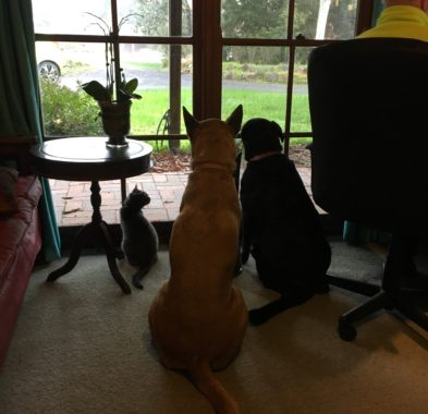 Office buddies watching the rain
