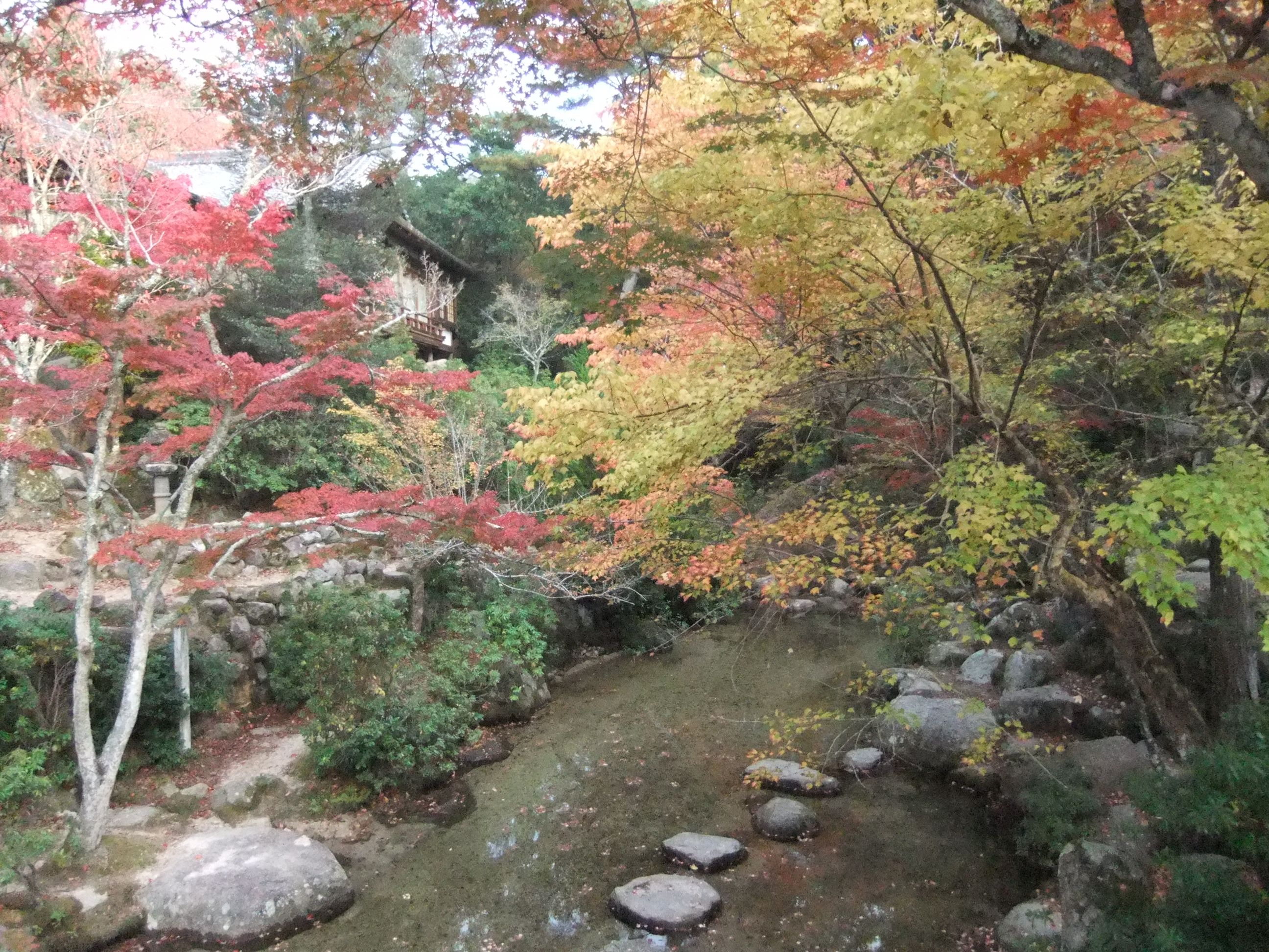 Colorful trees in autumn in Japan.