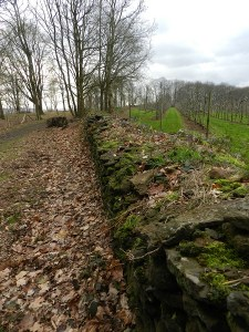 De Stenen Muur (schollen ijzerzandsteen) dateert uit 1814.