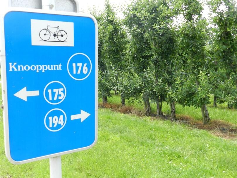 Haspengouw - fruitboomgaarden - fietsknooppunten
