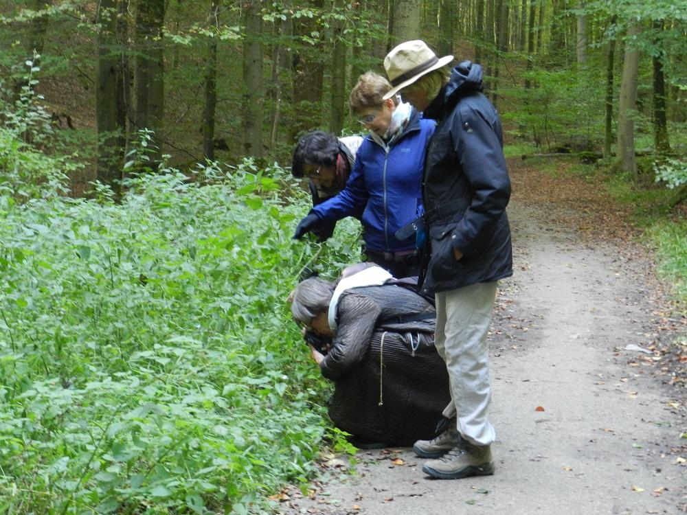 Schone Eik-wandeling Zoniënwoud