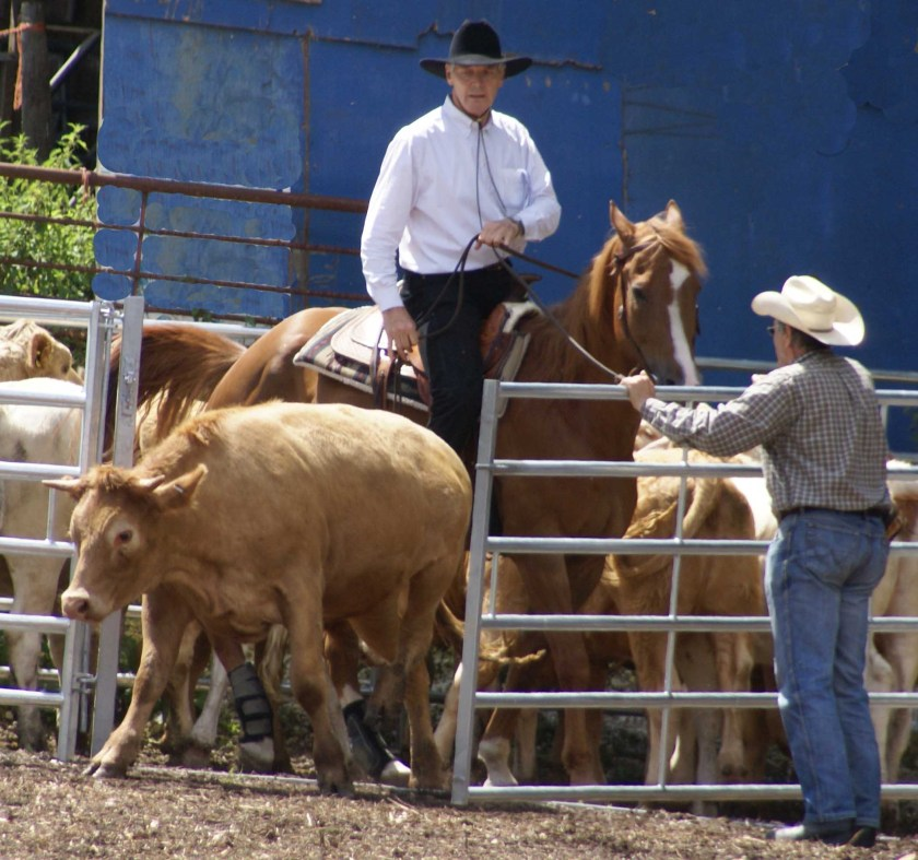 Western riding-Solo penning