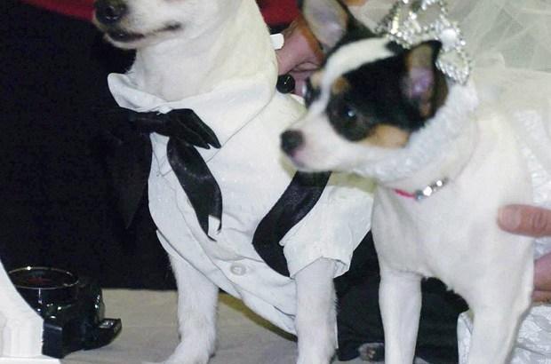 casamento_canino