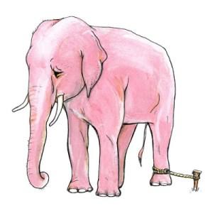 The Elephant belief