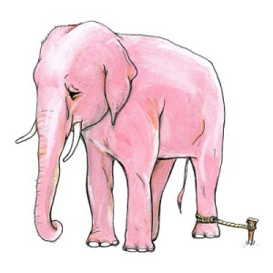 The Elephant belief