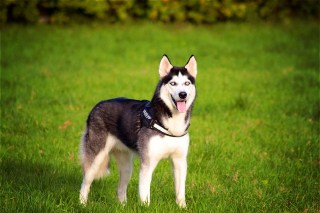Top Interesting Facts about your Dog you didn't know