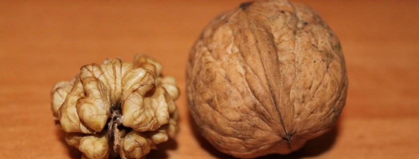 Was ist Brainfood?