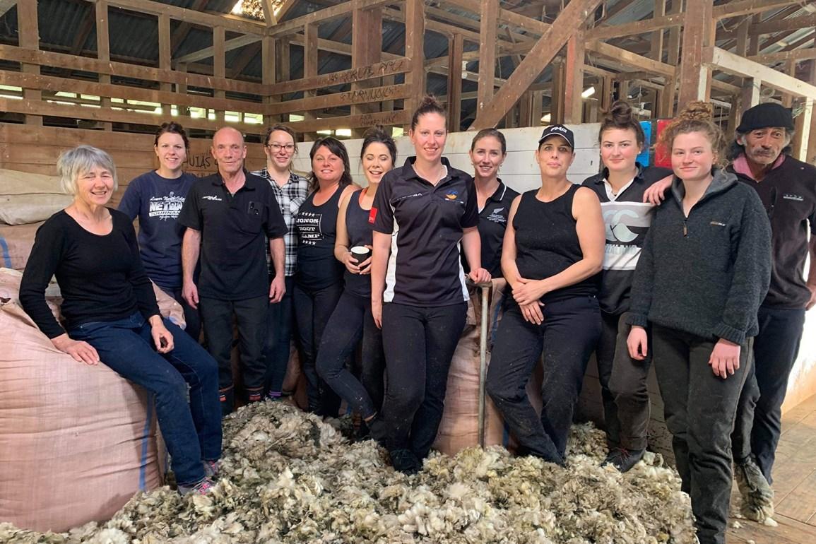 Sheep Shearers
