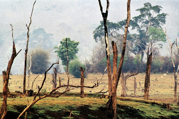 Trees by Raghu Rai at Art Alive Gallery, New Delhi
