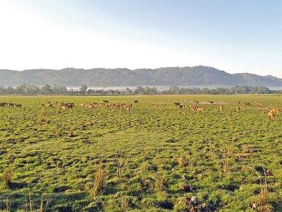 Deer-spotting at Kaziranga National Park