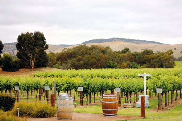 Jacob's creek has a selfie spot amongst its Shiraz vines