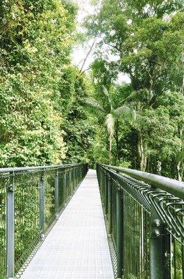 Tambourine Rainforest Skywalk