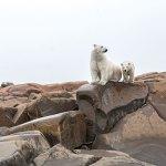 Manitoba, Canada, Polar Bear Capital of the World