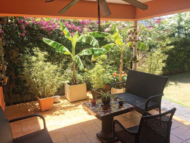 Beatriz Sala Santacana's tropical outdoor garden