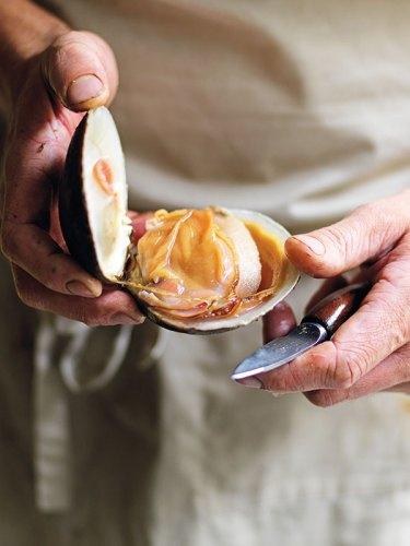Mahogany clam at Iluka. Photograph by Jason Loucas