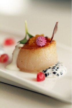Scallop marinated in citrus, Arola