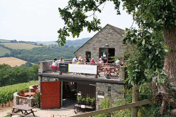 The terraces at Camel Valley Vineyards overlook acres of sloping hills