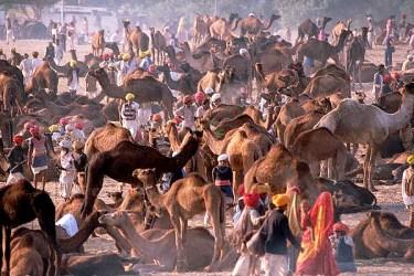 Pushkar Festival, Rajasthan