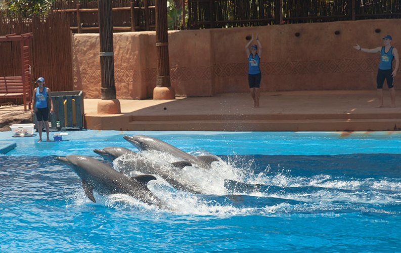 The dolphin show