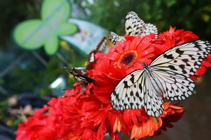 Changi Airport: Terminal 3 Transit Butterfly Garden
