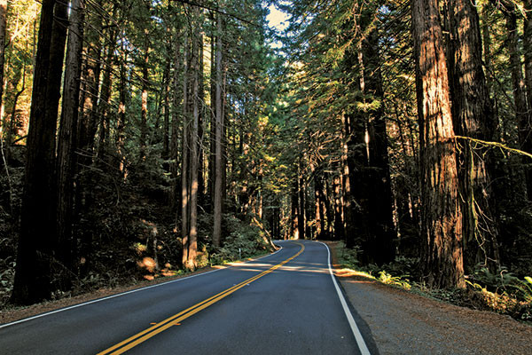 Redwood National and State Park, California